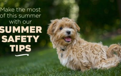 Make the Most of this Summer with Our Summer Safety Tips